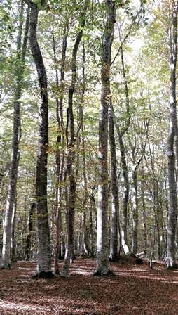 À propos d'un article publié dans une revue antispéciste : Vers une gestion antispéciste et utilitariste de nos forêts.