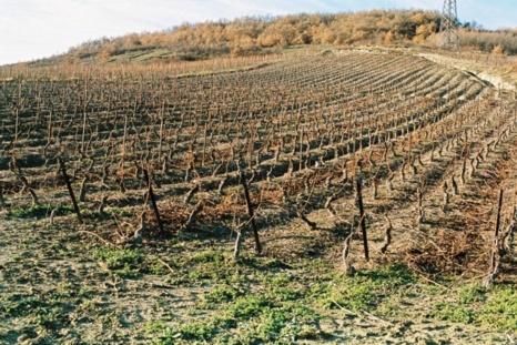 Se promener dans les vignes peut être dangereux.