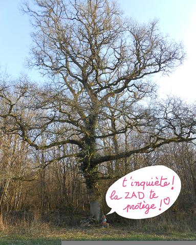 On avait Notre Dame des Landes, avec le Bois du Tronçay, voici Notre-Dame des Bois !
