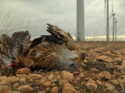 Pour lui, l'éolien était un piège mortel...