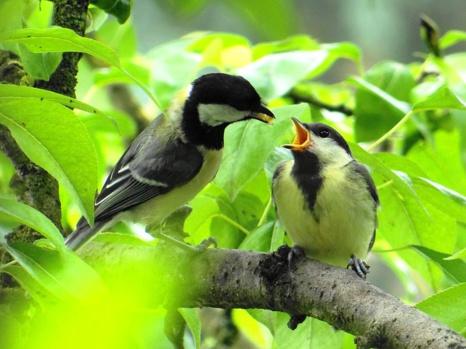 Changement climatique et survie des espèces