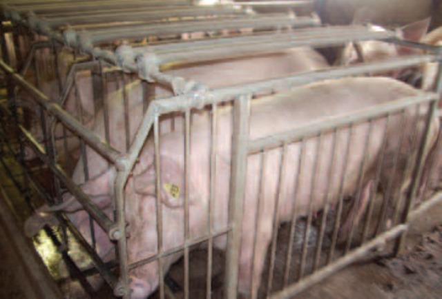 « Le respect du bien-être animal constitue la première des priorités pour les éleveurs »
