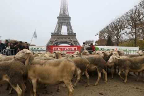 Manifestation anti-loup à Paris : une opération de communication ratée !