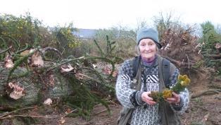 Christiane Peltier-Bernardini devant l'araucaria abattu