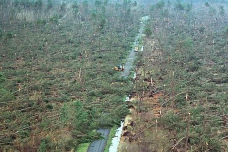 La forêt de Vendays-Montalivet en Gironde après le passage de la tempête de 1999