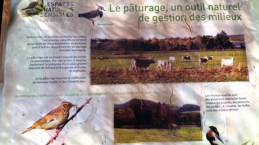 L'élevage bovin, une calamité écologique ? Ni toujours, ni partout !
