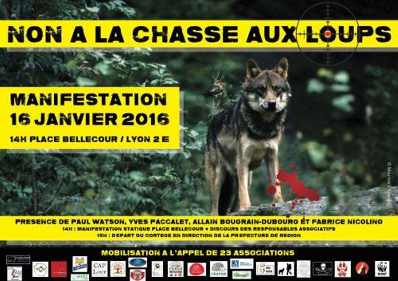 Non à la chasse aux loups ! Appel à manifester à Lyon et à Nice